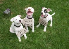 Adoptable Fridays - Pippa, Presto and Poe, litterally thrown away and brought back to be healthy happy adoptable pups in TN