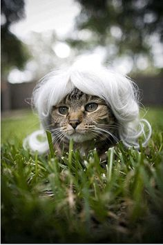 Cat wigs - its all the rage in Paris!