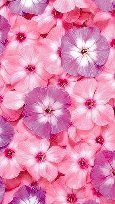 Flowery Wallpaper, Flower Background Wallpaper, Flower Phone Wallpaper, Cellphone Wallpaper, Flower Backgrounds, Nature Wallpaper, Galaxy Wallpaper, Wallpaper Backgrounds, Disney Wallpaper