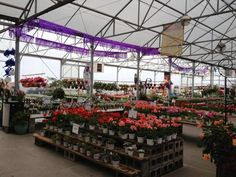 Proven Winners at Calloway's Nursery in North Plano Flower Nursery, Plant Nursery, Proven Winners, Garden Centre, Layouts, This Is Us, Flowers, Plants, Shop