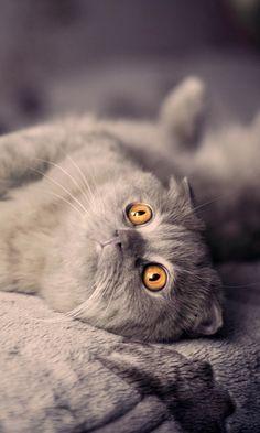 480x800 Wallpaper kitten, cat, down, playful
