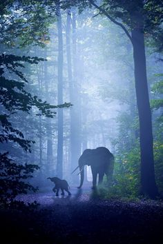 "Elephant: Mom And Her Calf: ""Enjoying The Forest."""