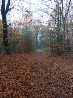 Wandelen bij Ermelo, cultuur historisch bos.