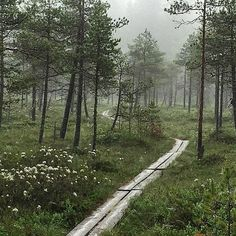 Bog / swamp and Finnish duckboards. Suo ja pitkospuut.