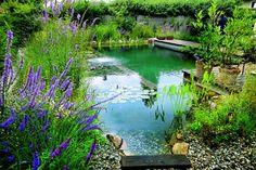 Krásná čistá voda a na březích fialová kyprej vrbice či půvabné šípatky. Takhle může vypadat propojení bazénu na koupání a okrasného jezírka pro potěchu oka.