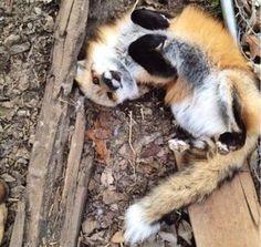 a fox just being a fox...