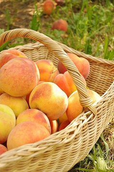 Peach Picking by yourhomebasedmom, via Flickr