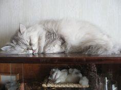 dreaming cat.