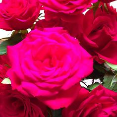 A #flower from #Folkestone Anyone know it's name? #saga #home #insurance #kent #gardening #garden #landscape #flowersofinstagram #floweroftheday #flowerporn #flowergarden #flowers #flowerartgraphy #instadaily #flowerlove #flowerlovers #flowerstagram #gardenlife #flowergram #flowerlife #picoftheday #pictureoftheday #mothernature #naturelovers #instalike #beautiful #f4f #instagood