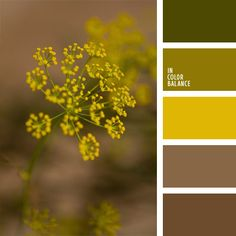 The combination of olive oil, mustard and neutral shades of brown marsh this palette. This color scheme can be used in the formation of Demi wardrobe (both male and female) for enjoying the outdoors and sports.