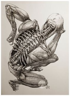 ArtStation - The Thinker from Beyond, Mau Vasconcellos Skeleton Drawings, Skeleton Art, Anatomy Sketches, Art Drawings Sketches, Medical Illustration, Illustration Art, Arte Com Grey's Anatomy, Human Anatomy Drawing, Anatomy For Artists
