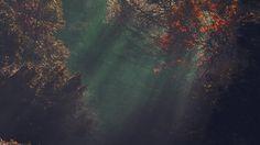 desktop-wallpaper-laptop-mac-macbook-air-na74-wood-nature-tree-sunshine-light-fall-red-wallpaper