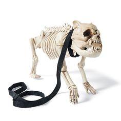 skeleton dog on leash