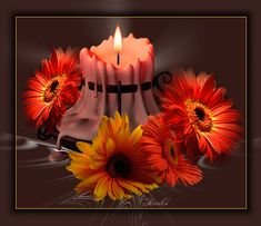 - My Desktop Nexus Fall Wallpaper, Animal Wallpaper, Wallpaper Backgrounds, Mermaid Wallpapers, Amazing Gifs, Candle In The Wind, Fall Candles, Autumn Photography, Beautiful Roses