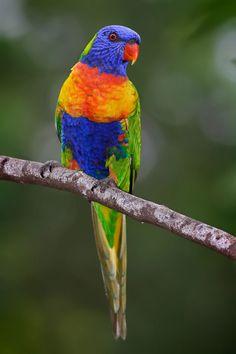 BIRDSCOLORFULPAJAROSAVESCOLORESUNUSUALINUSUALES42