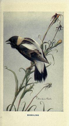 The way to study birds, - Biodiversity Heritage Library