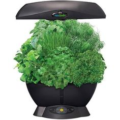 Miracle-Gro AeroGarden 6 with Gourmet Herb Seed Kit, Black