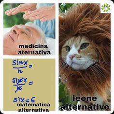 """I gattini per i vaccini di RIV vi augurano buona domenica e vi ricordano che se si utilizza l'aggettivo """"alternativo"""" un motivo c'è..  https://www.facebook.com/reteinformazionevaccini/posts/1694779190771170:0"""