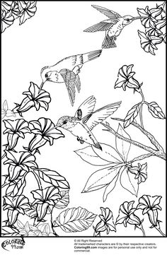 Hummingbirds And Flower Coloring Pages