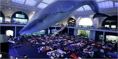 So much fun for kids - a sleepover at a museum!
