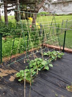 Vertical Cucumbers - simple and inexpensive way to trellis ...