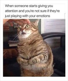 Enjoy these delicious kitty goodness memes! memes # cats # funny cats # animal memes # funny memes # caturday # caturday memes Source by sarahdobin Funny Animal Memes, Funny Cat Videos, Funny Animals, Cute Animals, Funny Quotes, Funny Memes, Hilarious, Memes Humor, Hilarious Memes