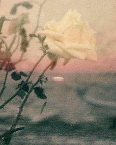Gaia, Flowers, Painting, Instagram, Painting Art, Paintings, Royal Icing Flowers, Painted Canvas, Flower