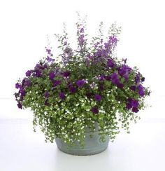 Bacopa, Angelonia, Verbena, Petunia. Angelonia really punches this one up. Love the purples. No size given, but I would go for deep 16 in pot.