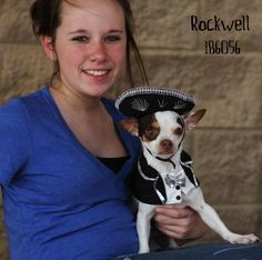 Meet ROCKWELL, a Petfinder adoptable Chihuahua Dog   Conroe, TX   Petfinder.com is the world's largest database of adoptable pets and pet care information....