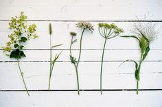 Book: Cut Flower Patch; photo Jason Ingram