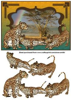 Africa Leopards on Craftsuprint designed by Aisne Smith - An A5 card front featuring leopards with decoupage pieces to enhance the overall card. - Now available for download!