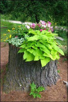Learn how to turn a tree stump into a planter :)