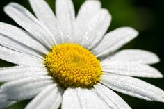 Morning dew   #Macro  #flower  #closeup  #Blooming  #summer  #UrbanPhotography  #Vertical  #Cool  #Crazy  #Creased  #Brilliant  #Brisk  #Light  #Visual   #LocationPhotography  #Wet  #Elastic  #Electric  #Elegant  #ProductPhotography  #Buoyant  #StudioPhotography  #Wild  #Wonder  #Elemental  #Elliptical  #Elusive   #Crushing  #Crusty  #Photography