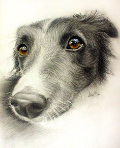 Graphite pencil drawing of a dog. Sadly the previous pinner felt no obligation to include the artist's name.