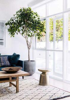 tree in living room