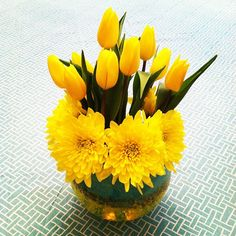 yellow tulips by Katie Kelley