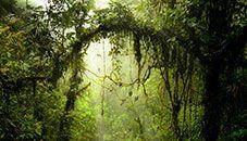 Monteverde Cloud Forest Preserve (Costa Rica)