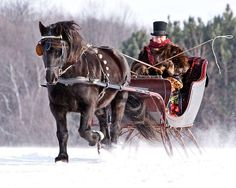 Sleigh ride in the snow      I wish we had snow. Would love a sleigh ride.
