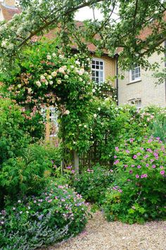 Garden Arch with Climbing Roses (Rosa) 'Celine Forrestier' and Honeysuckle (Lonicera) with Pink Cranesbill (Geranium)