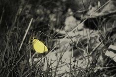 Butterfly Photography Photos, Butterfly, Butterflies