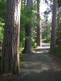 Trail through Trees Empire Gold Mine at Grass Valley CA