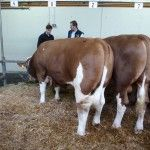 Fleckvieh-breeders will appreciate the detailed information that is available regarding proven sires from Bayern Genetik in order to help improve his herd genetics and performance!