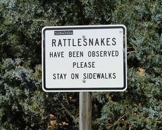 ...but do the rattlesnakes know to stay OFF the sidewalks??