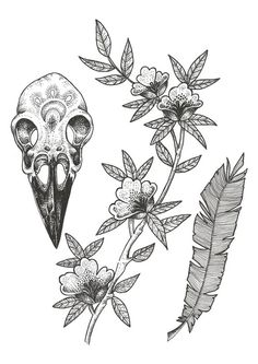Crow Skull Study by BirdBlackEmporium on Etsy (can't wait to frame and hang this print in our home!)