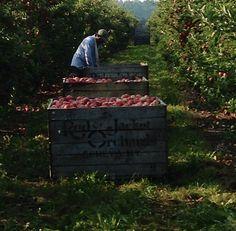 Red Jacket Orchards in Geneva, NY