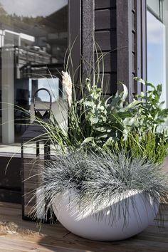 Grønn - Lilly is Love Large Outdoor Planters, Outdoor Pots, Outdoor Gardens, Balcony Garden, Garden Planters, Rooftop Garden, Landscape Design, Garden Design, Green Garden