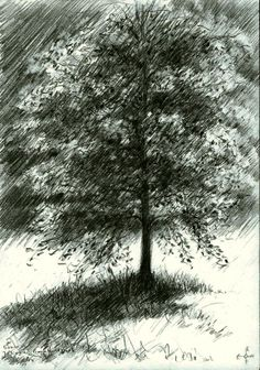 Juliana-Bernhard park at Voorburg, Netherlands - 08-04-14 (for sale). Graphite pencil drawing on paper (14.8 x 21 cm - A5 format). Sales info: info@corneakkers.com. See more: www.corneakkers.com #arts #kunst #Corné #Corne #Akkers #藝術 #アート #искусство #فن  #seni