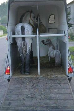There are many horses hauled for rodeo with a companion like this! Keeps the horse calm...