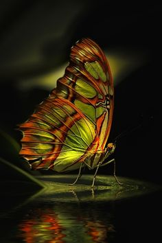 Magical butterfly....