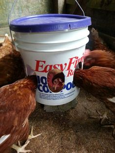 Chicken Feeder. makeshift but easy - just a photo, sorry, but self-explanatory.